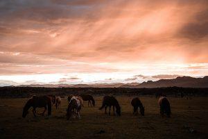 Horses Monoglia