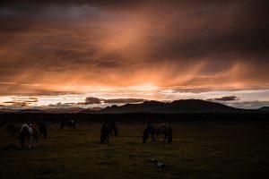horse mongolia 2