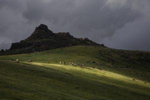 Natural Park Mongolia Horse